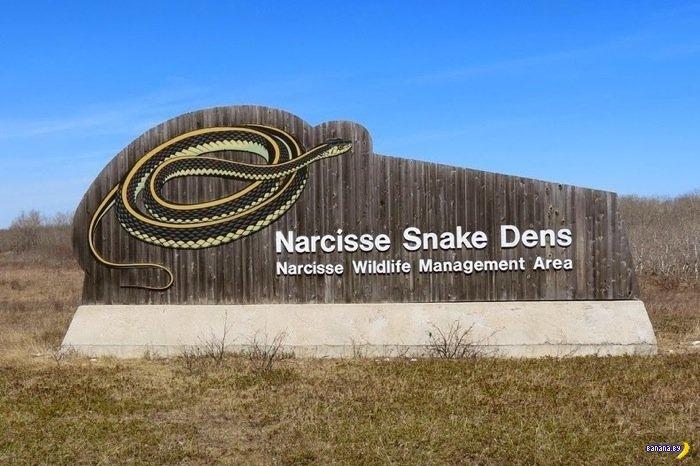 winnipeg snakes