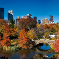 landscape-and-trees-in-central-park-new-york-city