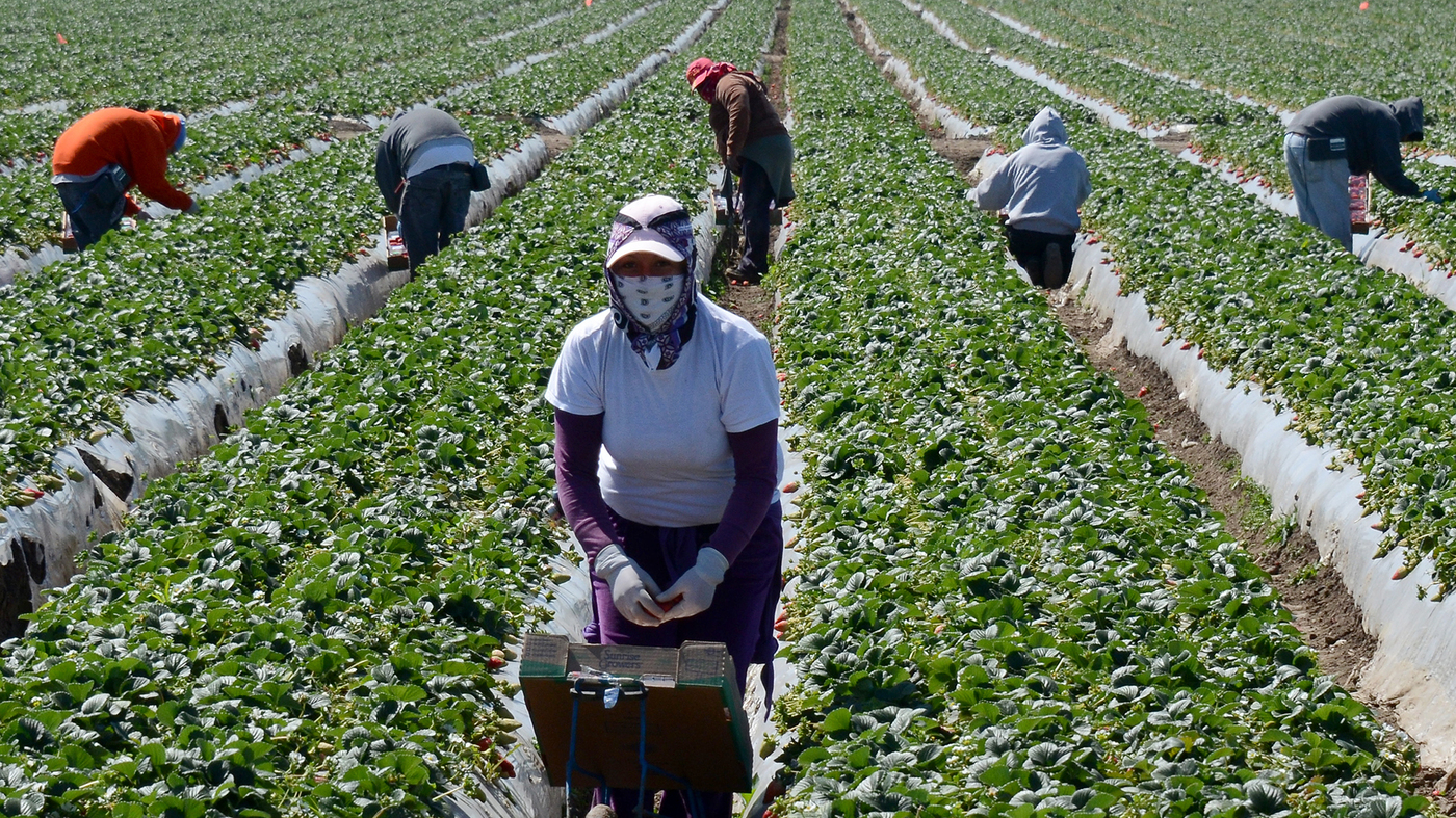 Agricultural Immigrant Workers In Canada Get 1 500 From Government Visaplace